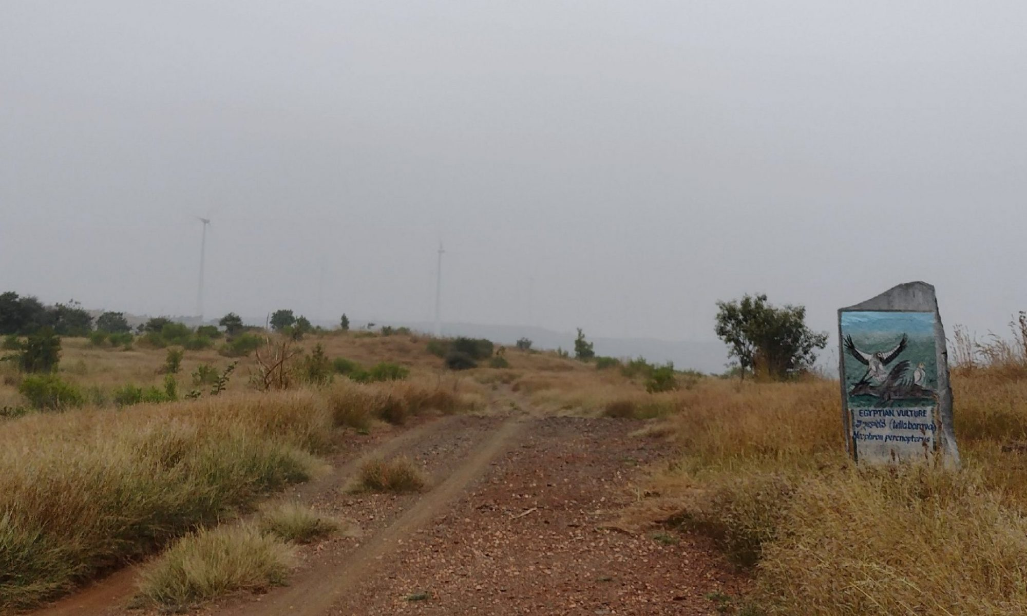 Bush Camp, Kalpavalli